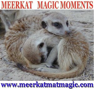 Meerkat Magic Moments 0030.jpg