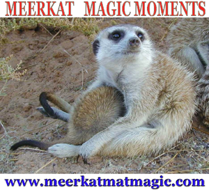Meerkat Magic Moments 0033.jpg