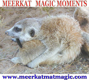 Meerkat Magic Moments 0034.jpg