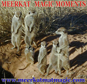 Meerkat Magic Moments 0038.jpg