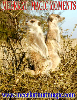 Meerkat Magic Moments 0042.jpg