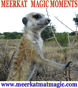 Meerkat Magic Moments 0043.jpg