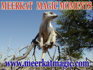 Meerkat Magic Moments 0051.jpg