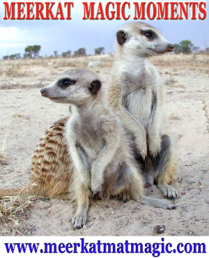 Meerkat Magic Moments 0067.jpg