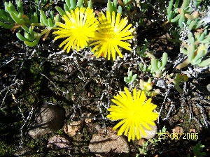 The Meerkat Magic Valley Reserve plant species flora 56.JPG