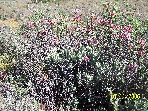 The Meerkat Magic Valley Reserve plant species flora 71.JPG